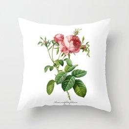 Vintage Rose - Redoute's Rosa Centifolia Foliacea Throw Pillow
