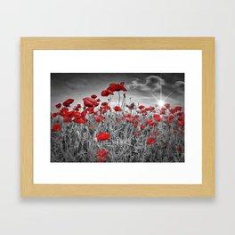 Idyllic Field of Poppies with Sun Framed Art Print