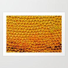 honey comb Art Print