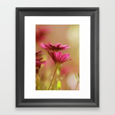 Pink Blush Framed Art Print