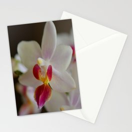 White Orchid Close Stationery Cards