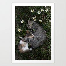 Sleep [A CAT AND A KITTEN] Art Print