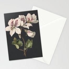 M. de Gijselaar - Pelargonium album bicolor (1830) Stationery Cards