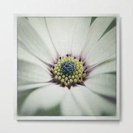 Osteospermum Flower Macro Metal Print