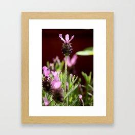 lavendula - V Framed Art Print