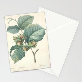 corylus maxima, Hazel Nut Redoute Roses 4 Stationery Cards