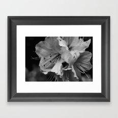 Timeless Black & White  Framed Art Print