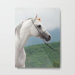 horse collection. arabian white Metal Print