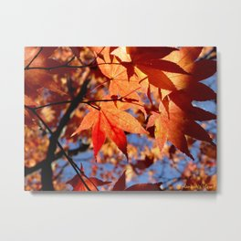 Fall Collage  Metal Print
