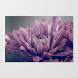 Beautiful Romantic Purple Mums Canvas Print
