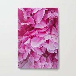Pink Ruffles Metal Print