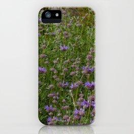 Purple Sage Bushes iPhone Case