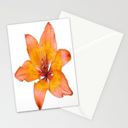 Coral Colored Lily Isolated on White Stationery Cards