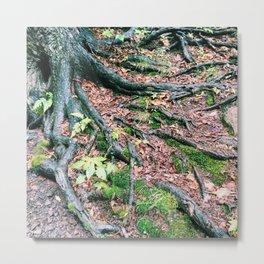 Pondside Park Metal Print