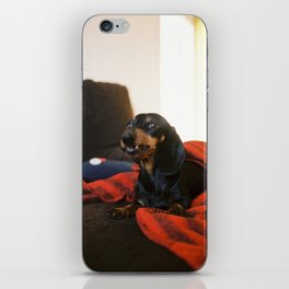 Dachshund on the couch iPhone Skin