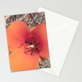 Desert Mariposa Lily Stationery Cards