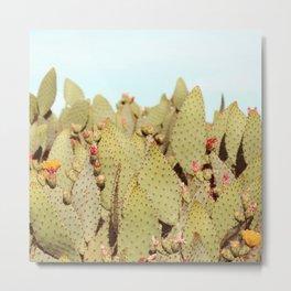 Prickly Pear #4 Metal Print