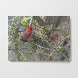 His Majesty the Cardinal Metal Print