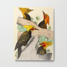Monograph of the picides - Alf. Malherbe Scientific Bird Illustration Metal Print