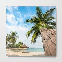 tropical palm on the beach Metal Print