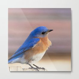 Watercolor Bird, Eastern Bluebird 01, Middletown, Maryland Metal Print