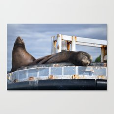 Sea Lion in the Puget Sound Canvas Print