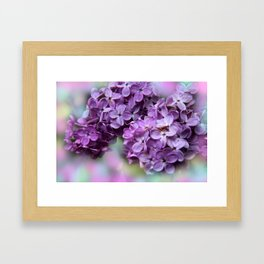 lilacs - pastel background Framed Art Print