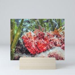 Red Scorpionfish Underwater (Scorpaena scrofa) Close Up Mini Art Print