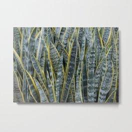 Snake Plants II Metal Print
