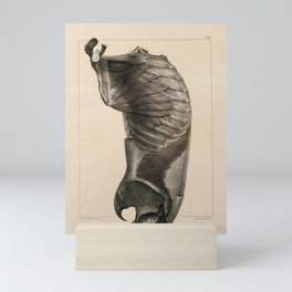 Trunk side view, showing the muscles. Coloured lithograph by N.H Jacob, 1831-1854. Mini Art Print