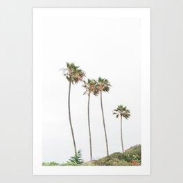 Tall Palm Trees Art Print