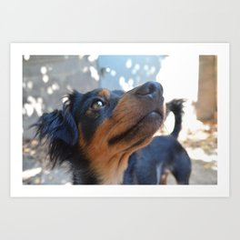 Chalie or Charly is one beatiful dog Art Print