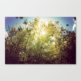 Bamboo in Blue & Green  Canvas Print