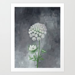 Queen Anne's Lace Flower Painting Art Print