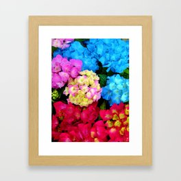 Red Blue Rose Flower Blossoms Hydrangeas Framed Art Print