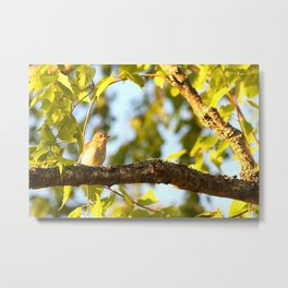 Songbird Singing On The Branch  #decor #society6 Metal Print