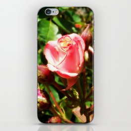 Natural Beauty • Point Defiance Rose Gardens • Tacoma, WA iPhone Skin