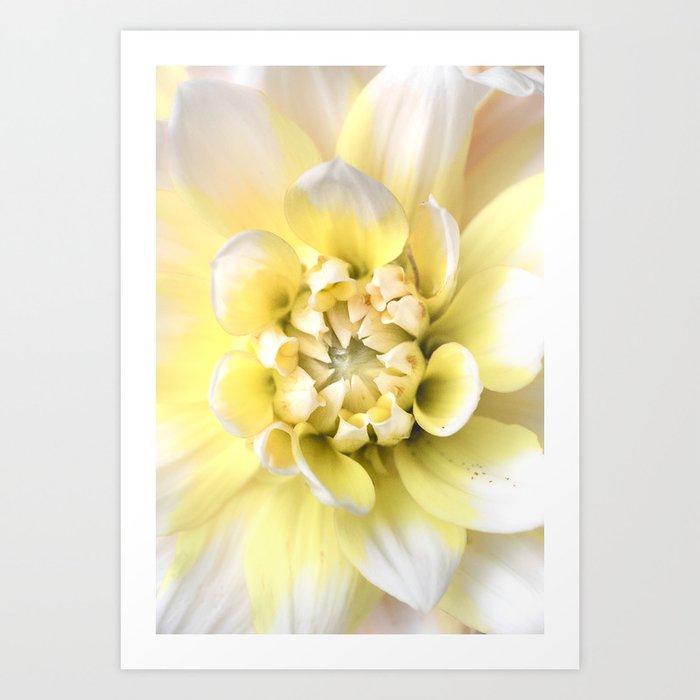 Dahlia in Bloom Kunstdrucke