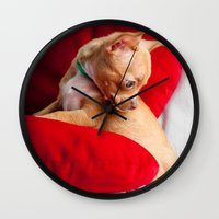 chihuahua Wall Clocks featuring Chihuahua by Luca Spanu