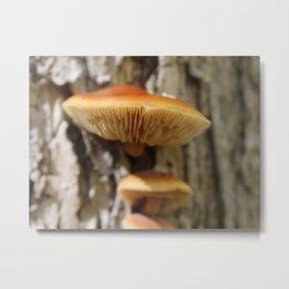 Mushroom 2 Metal Print