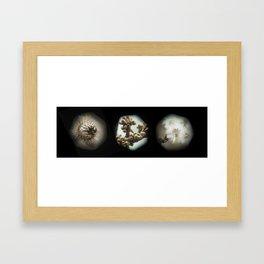 Orbs of Winter Framed Art Print