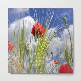 cornfield poppy I Metal Print