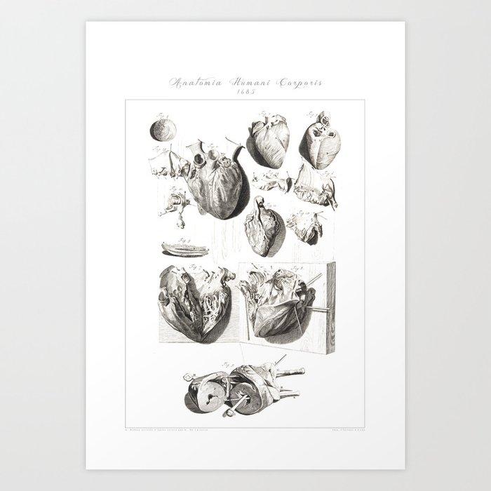Human Anatomy Art Print HEART ATRIUM VENTRICLE Vintage Anatomy, doctor medical art, Antique Book Pla Kunstdrucke