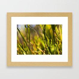 Grass close up shot with sunshine Framed Art Print