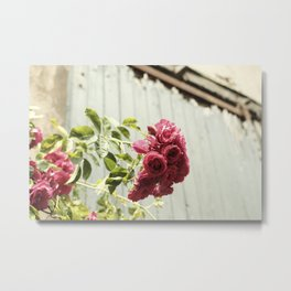 Vintage Rose IIII  | Pastel Color | Street Photography | Flower Photography | Fine Art Photo Print Metal Print