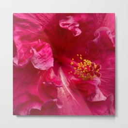 Big Pink Hibiscus Flower The Xandri Collection Metal Print
