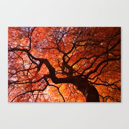 Ephemeral - Fall Maple Leaves, Nature Photography Canvas Print
