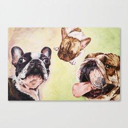 Hey, Bulldog Canvas Print