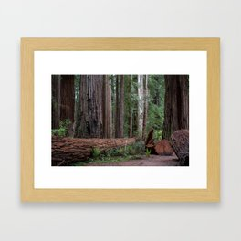 Redwoods Framed Art Print