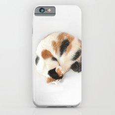 Sleeping Calico Cat Slim Case iPhone 6